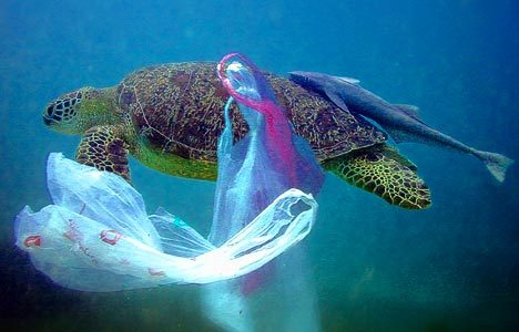 Sea Turtle caught in the plastic bag